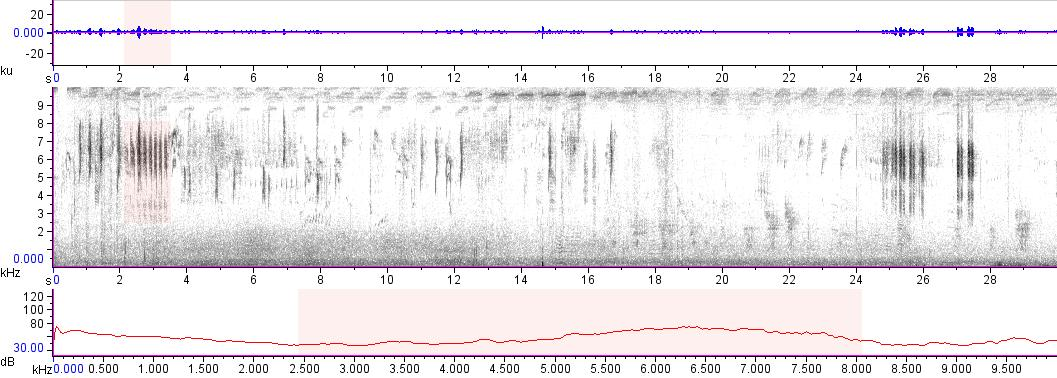 Sonogram of recording #AV 13032