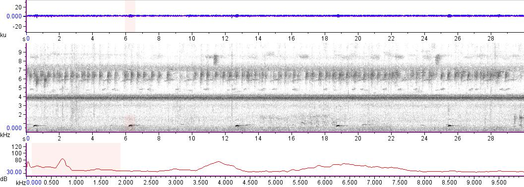 Sonogram of recording #AV 13038