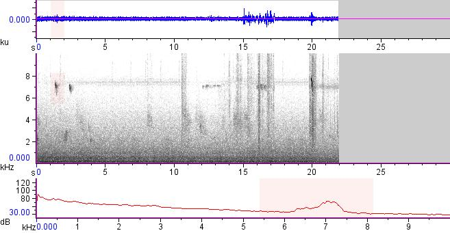 Sonogram of recording #AV 13114
