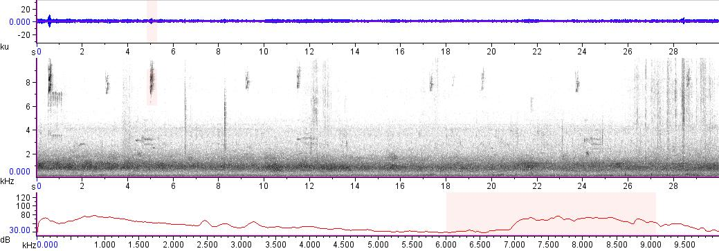 Sonogram of recording #AV 13123