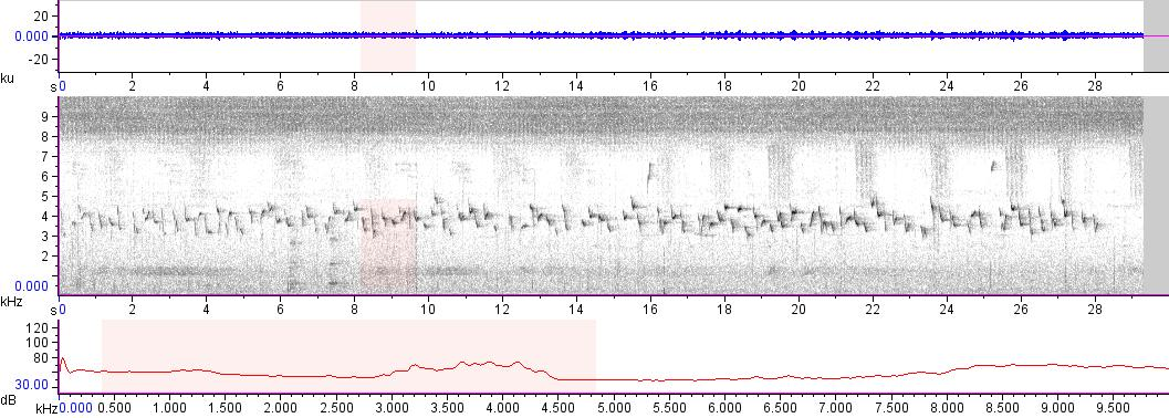 Sonogram of recording #AV 13156
