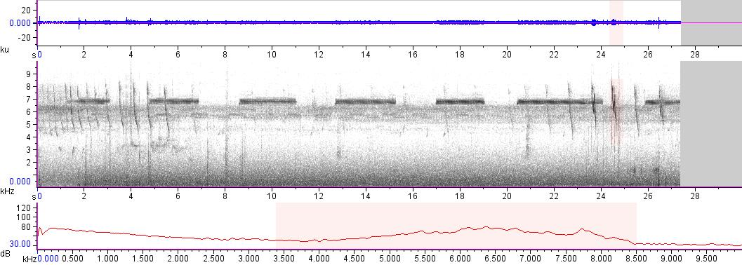 Sonogram of recording #AV 13162