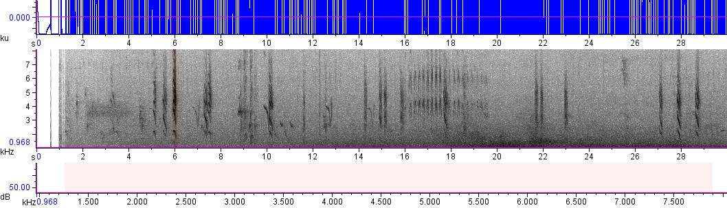 Sonogram of recording #AV 13178