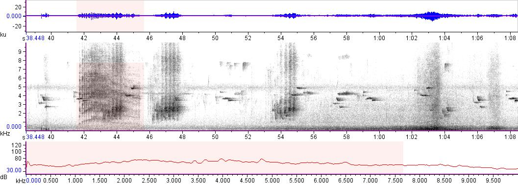 Sonogram of recording #AV 13220