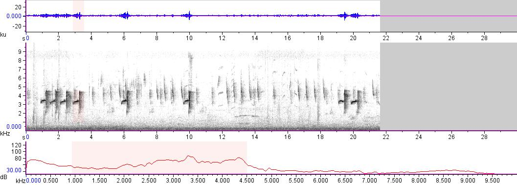 Sonogram of recording #AV 13252