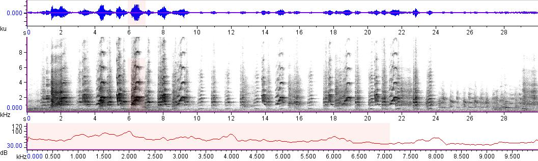 Sonogram of recording #AV 13265
