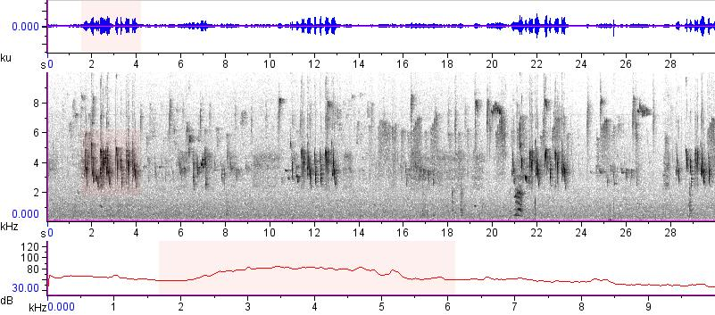 Sonogram of recording #AV 13269