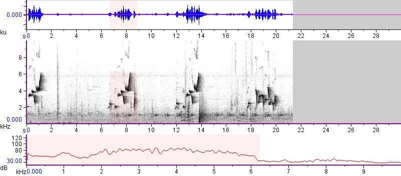 Sonogram of recording #AV 13271