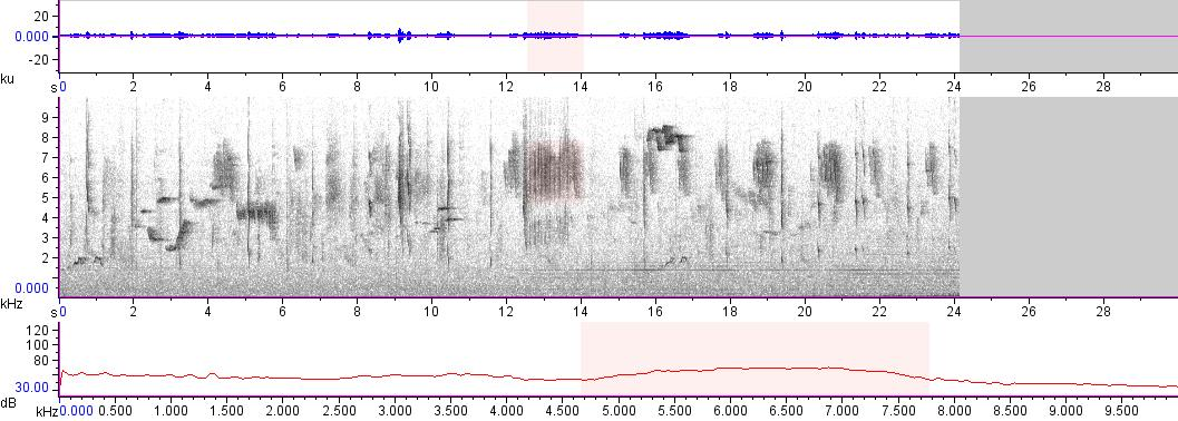Sonogram of recording #AV 13309