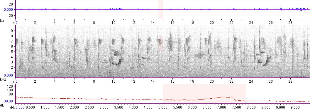 Sonogram of recording #AV 13310