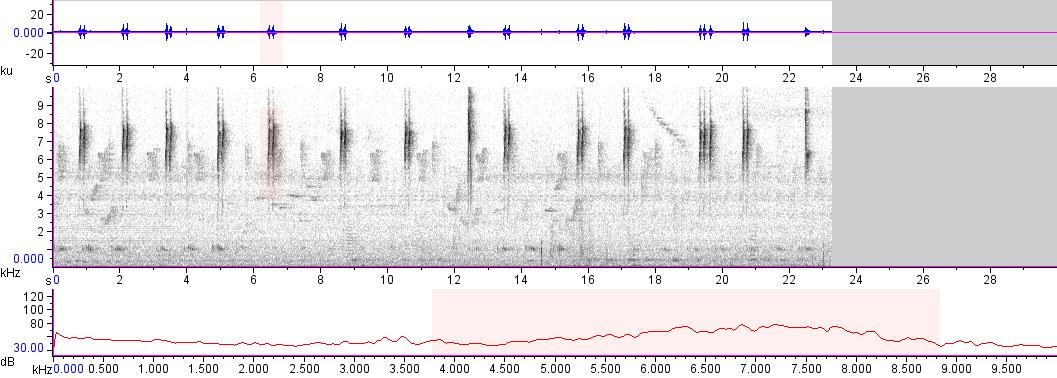 Sonogram of recording #AV 13313