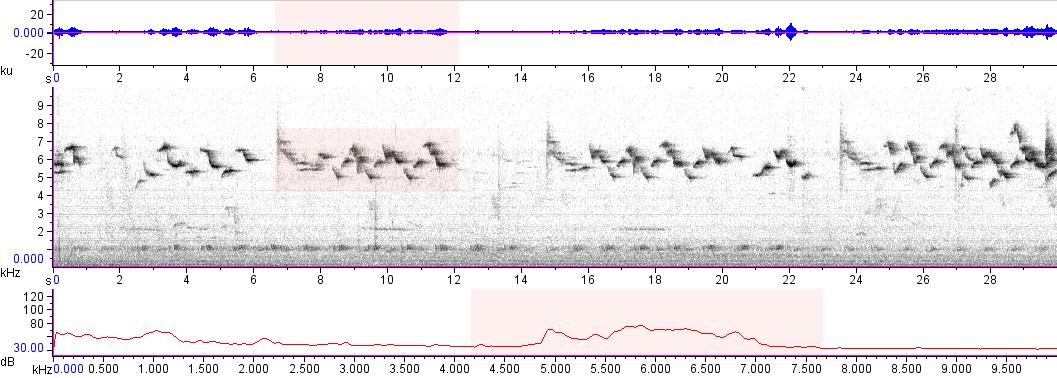 Sonogram of recording #AV 13325