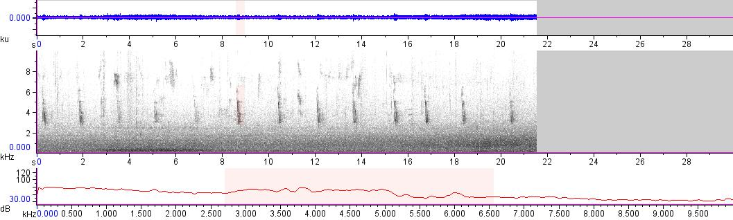 Sonogram of recording #AV 13354