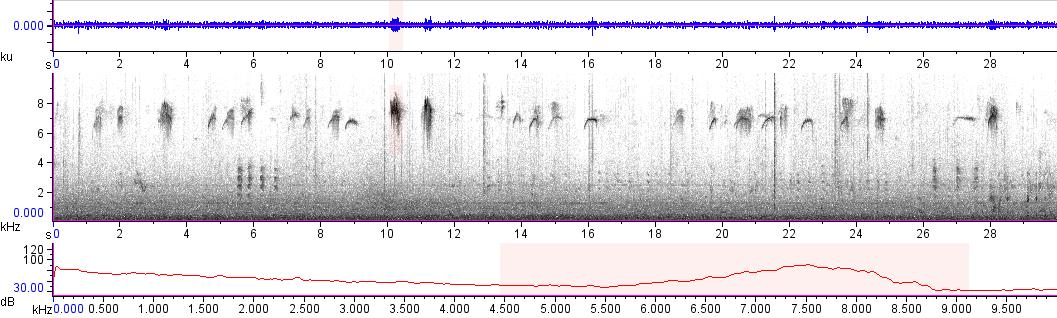 Sonogram of recording #AV 13356
