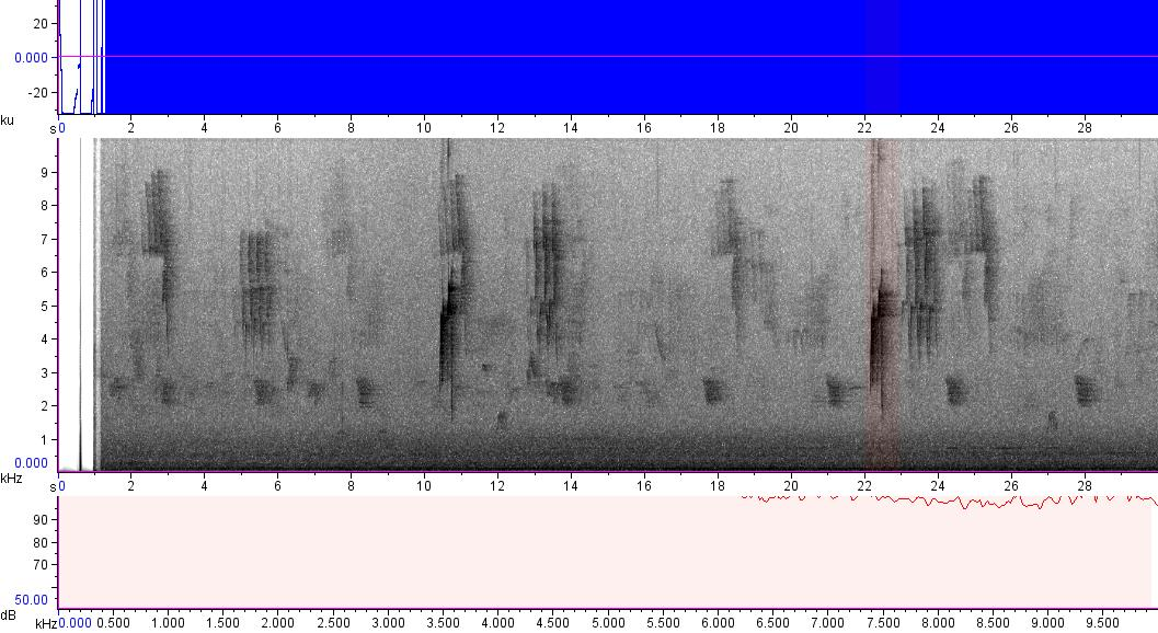 Sonogram of recording #AV 13366
