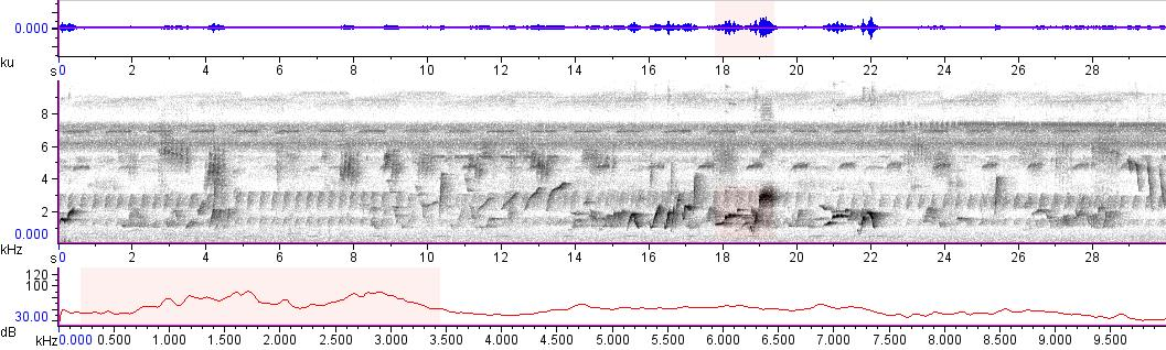 Sonogram of recording #AV 13384