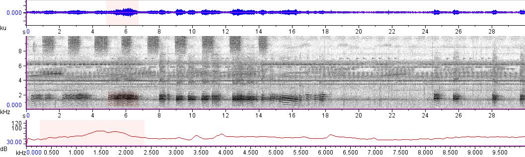 Sonogram of recording #AV 13387