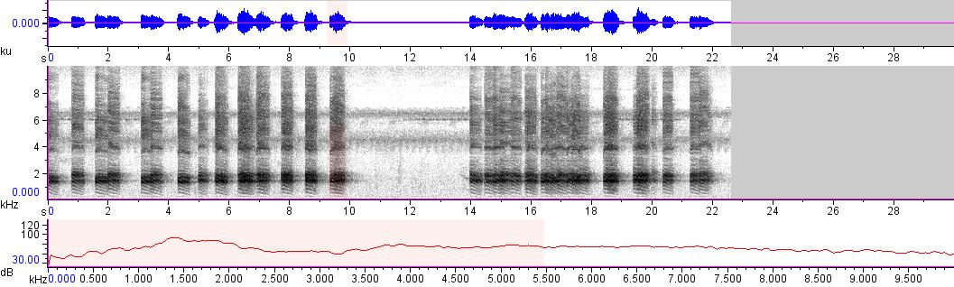 Sonogram of recording #AV 13391