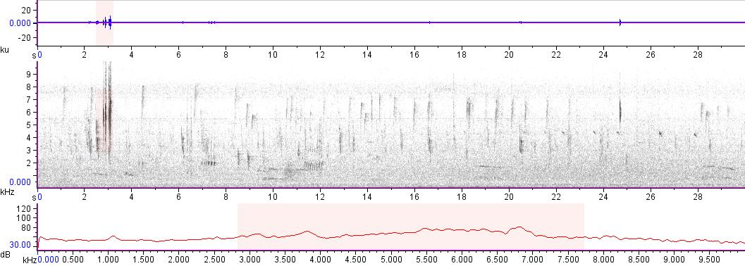 Sonogram of recording #AV 13448