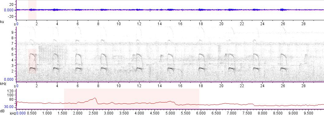 Sonogram of recording #AV 13450