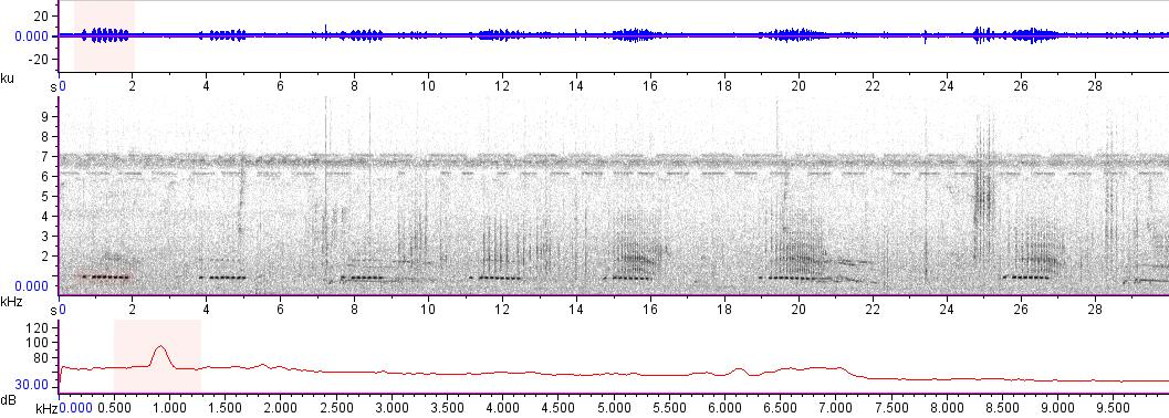 Sonogram of recording #AV 13455