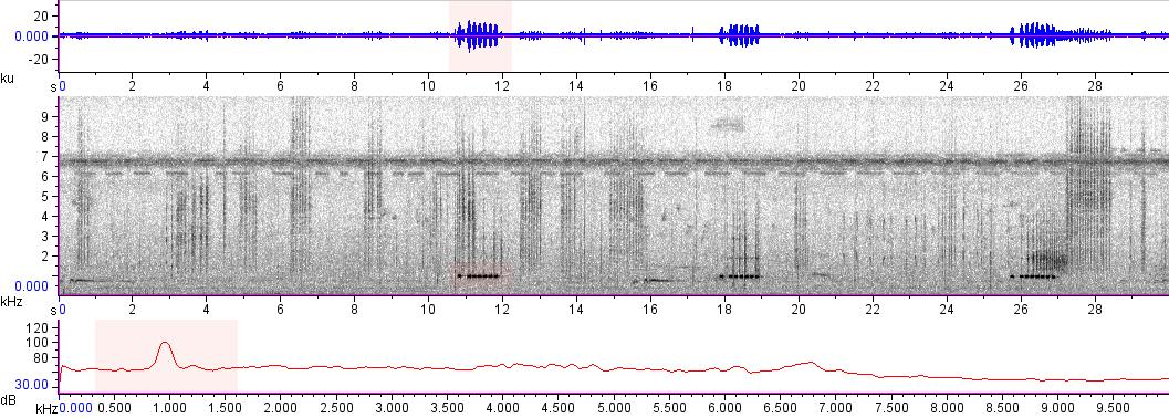 Sonogram of recording #AV 13457