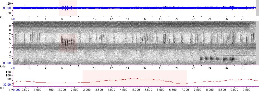 Sonogram of recording #AV 13530