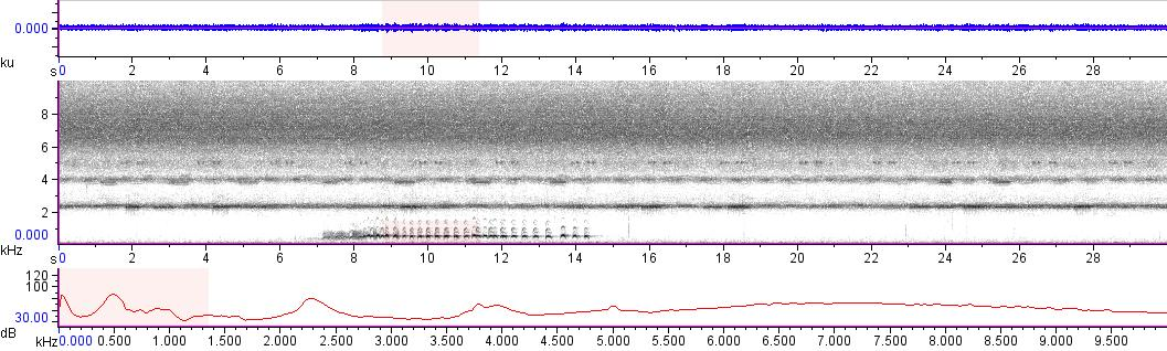 Sonogram of recording #AV 13554