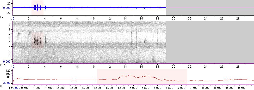 Sonogram of recording #AV 13558