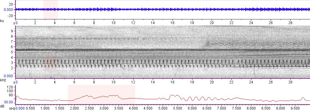 Sonogram of recording #AV 13560