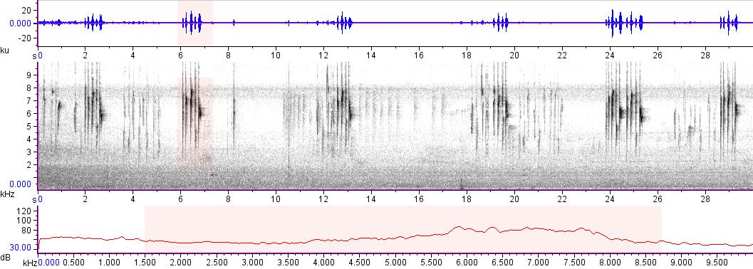 Sonogram of recording #AV 13570