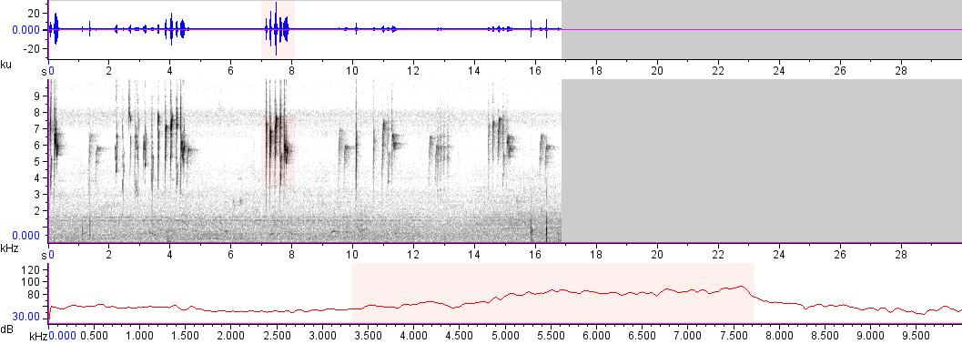 Sonogram of recording #AV 13571