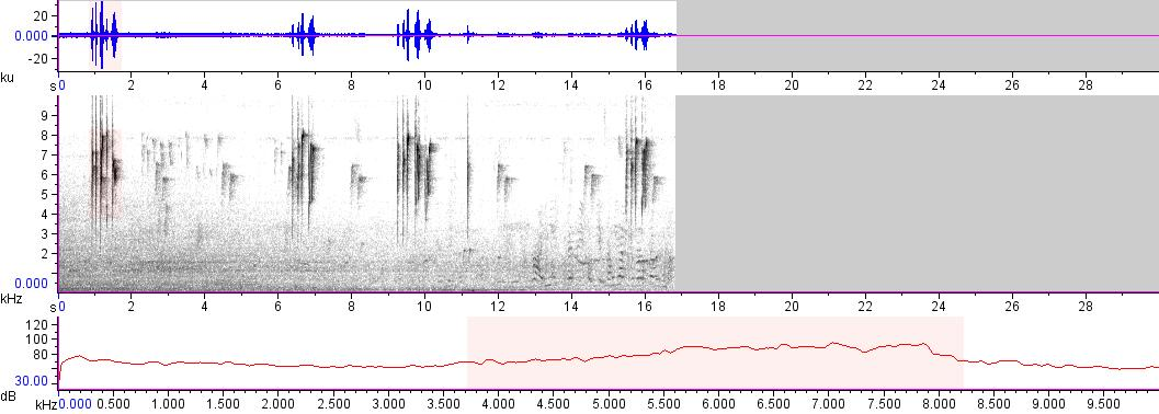 Sonogram of recording #AV 13572