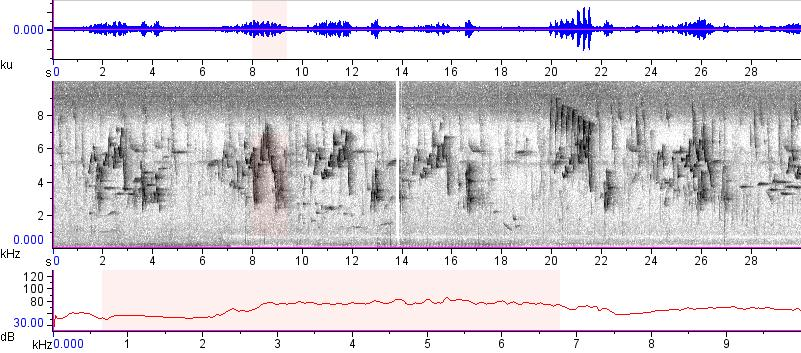 Sonogram of recording #AV 13596