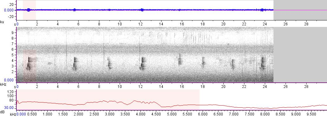 Sonogram of recording #AV 13627