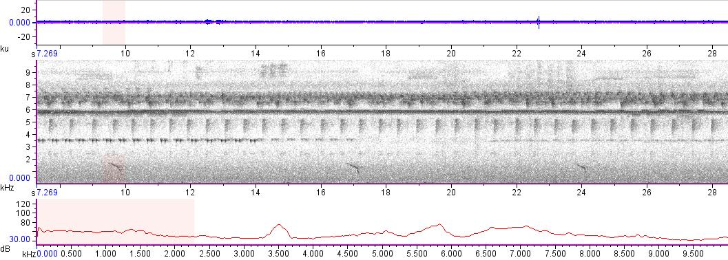 Sonogram of recording #AV 13643