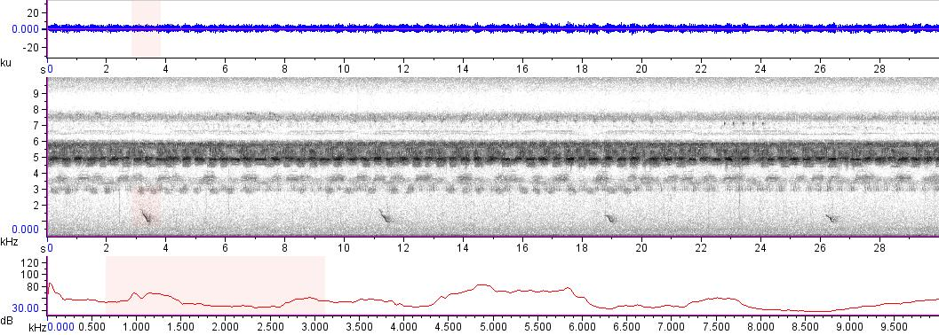Sonogram of recording #AV 13644