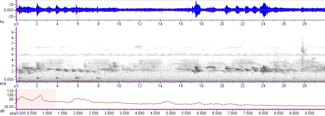 Sonogram of recording #AV 13654