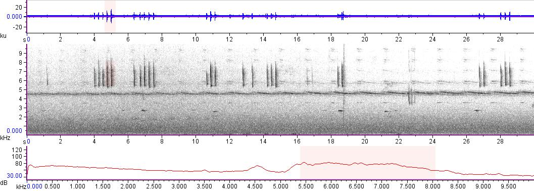 Sonogram of recording #AV 13663