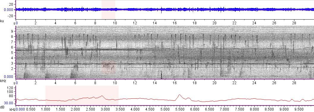 Sonogram of recording #AV 13669