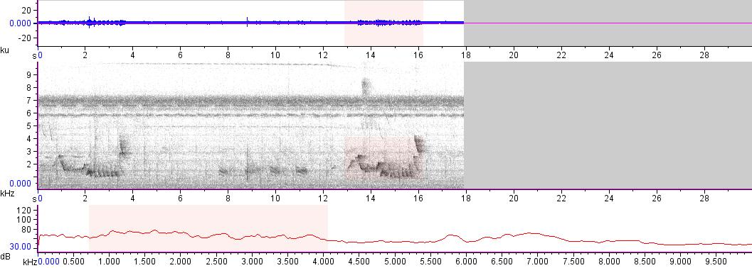 Sonogram of recording #AV 13689