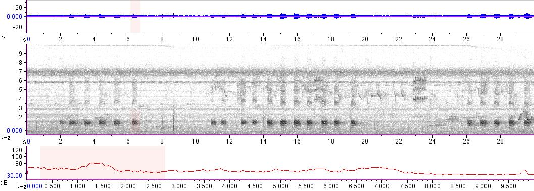 Sonogram of recording #AV 13693