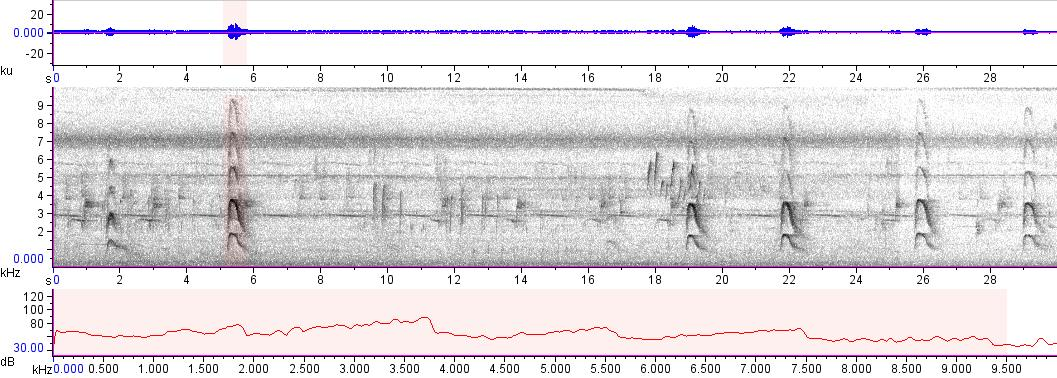 Sonogram of recording #AV 13708
