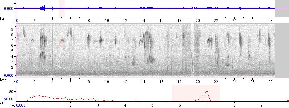 Sonogram of recording #AV 13750