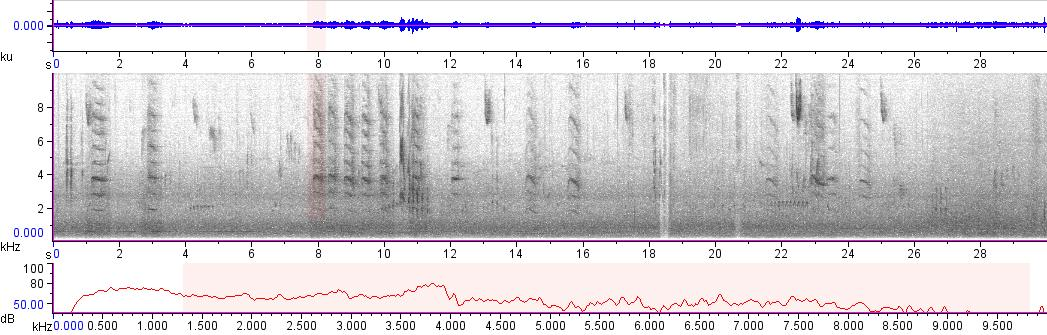 Sonogram of recording #AV 13753