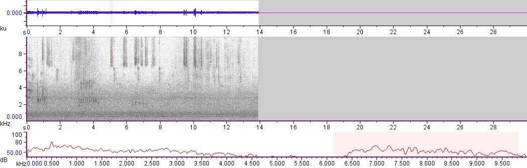 Sonogram of recording #AV 13757