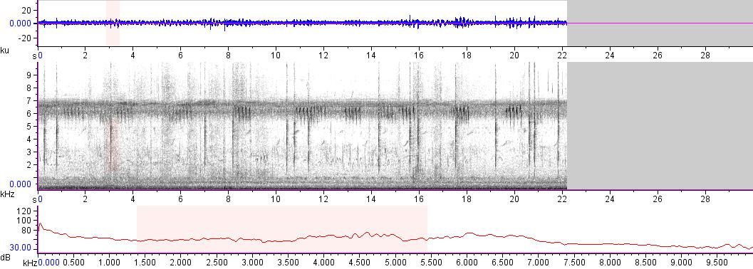 Sonogram of recording #AV 13831