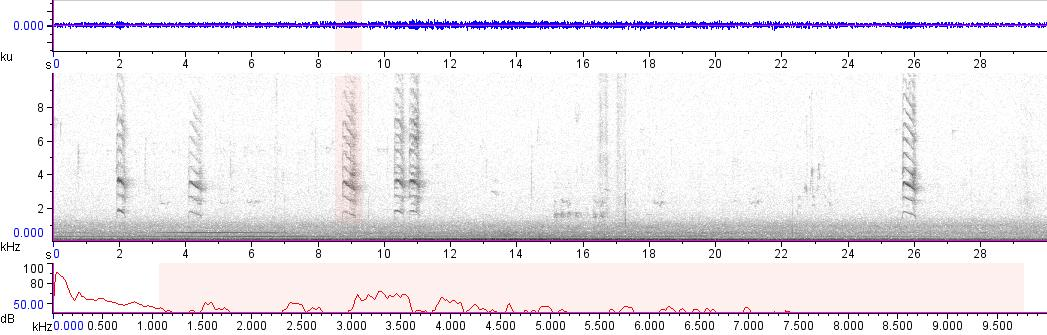 Sonogram of recording #AV 13845