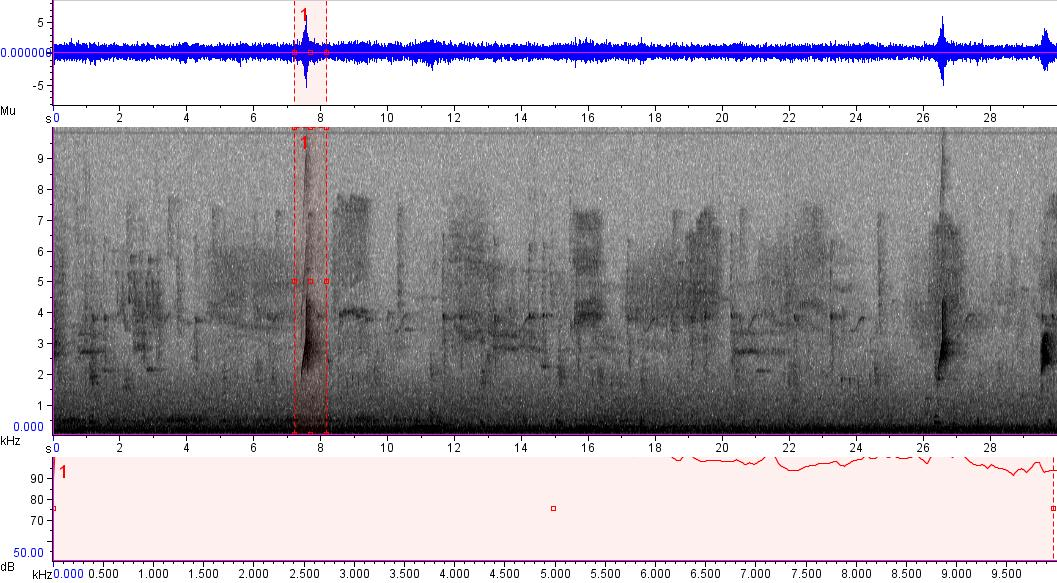Sonogram of recording #AV 13852