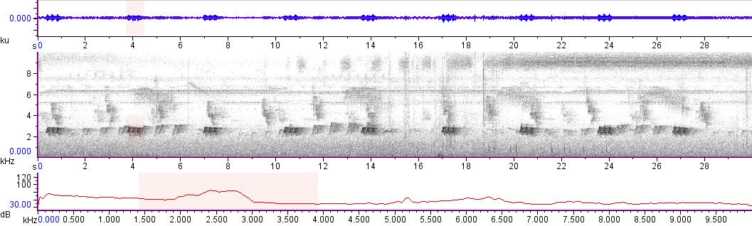 Sonogram of recording #AV 13951